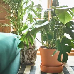 Chậu cây và bonsai